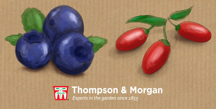 Thompson & Morgan logo with drawing of blueberries and goji berries