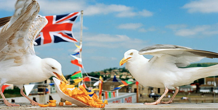 Great British Seaside Exhibition: seagulls and chips by Martin Parr / Magnum Photos