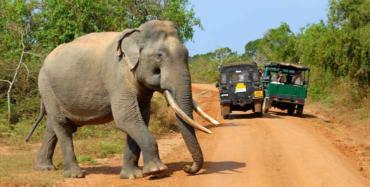 Elephant safari in Sri Lanka