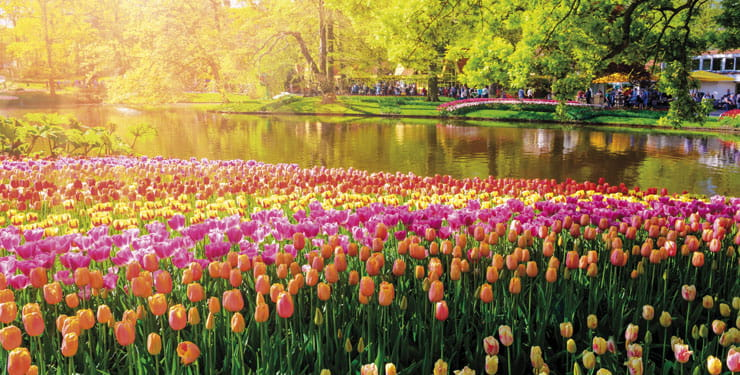Keukenhof gardens overflows with colourful tulips