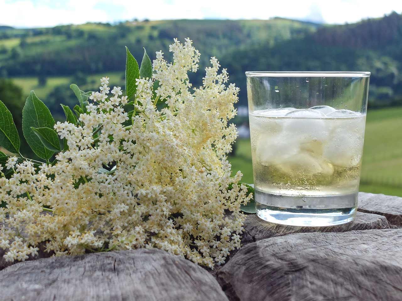 elderflower gin how to make
