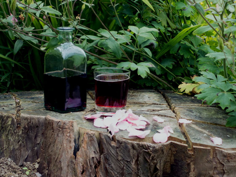 Homemade rosehip cordial