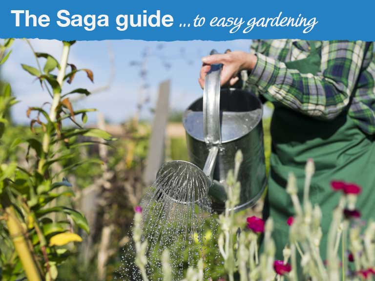 /contentlibrary/saga/publishing/verticals/guides/guide-to-easy-gardening/guide_easy-gardening_768x576.jpg