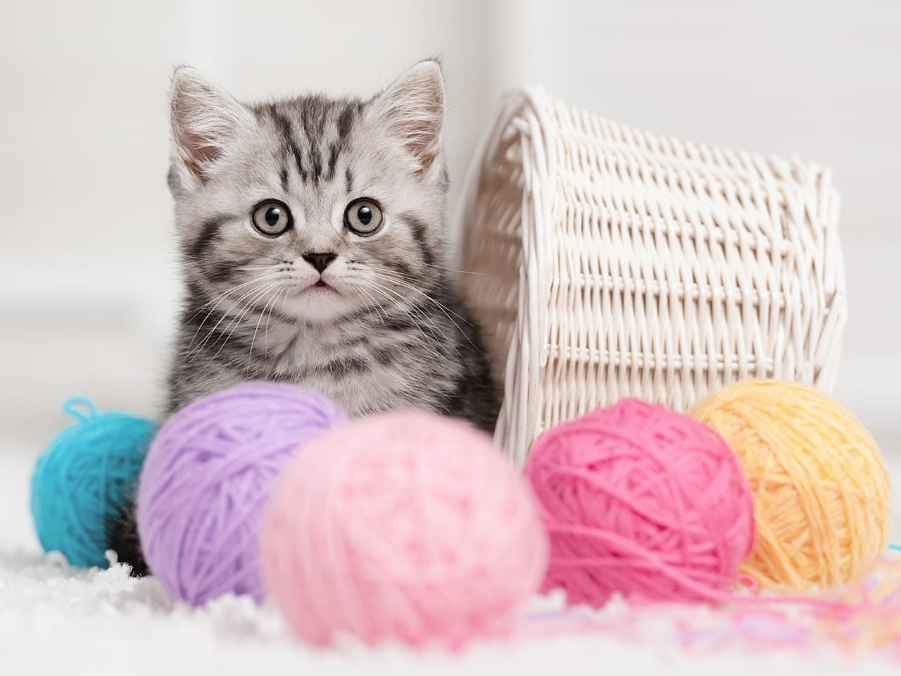 Kitten surrounded by balls of wool