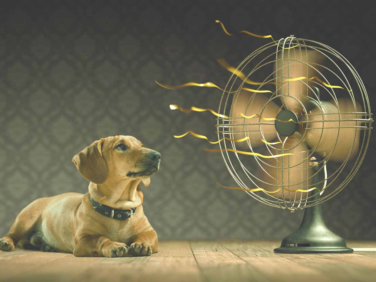 Dog keeping cool next to an electric fan