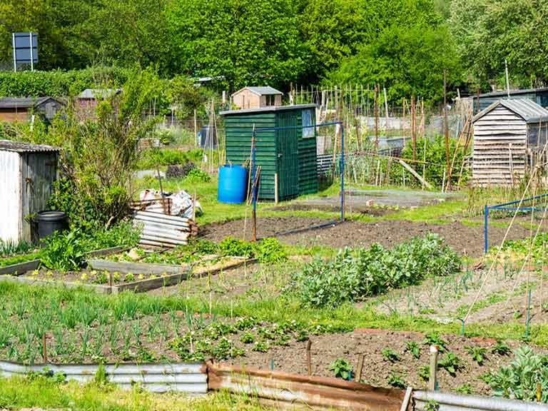 Joining an allotment group, or taking dance classes, could be just what the doctor ordered