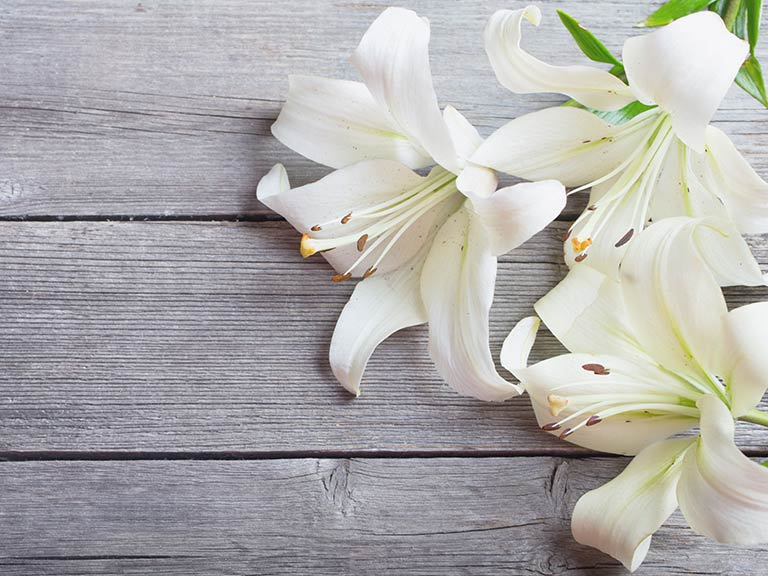 White lilies on a wooden background