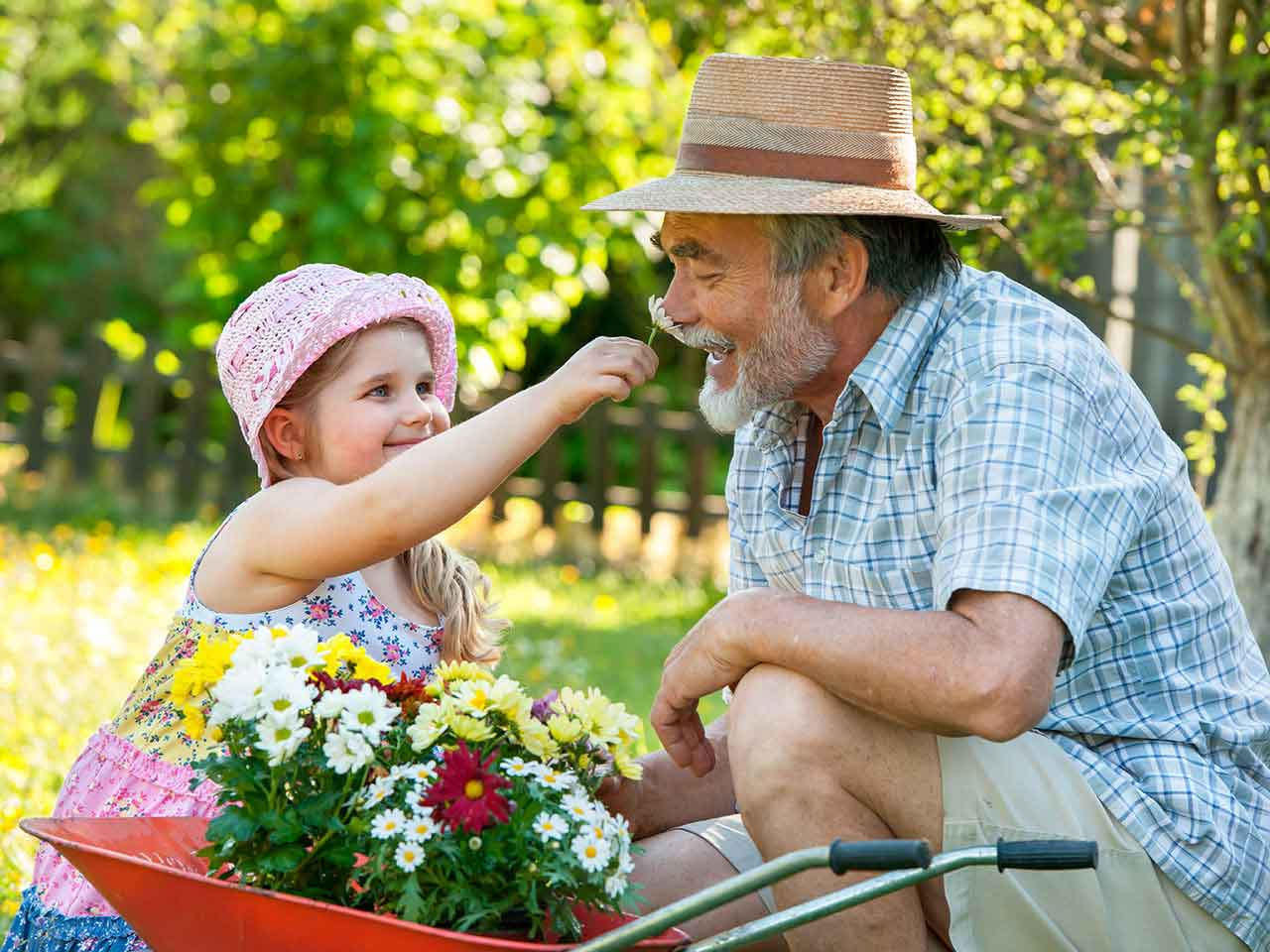 Grandfather smelling flower held out by granddatughter in the garden