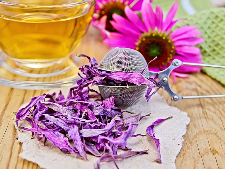 Echinacea flower and tea