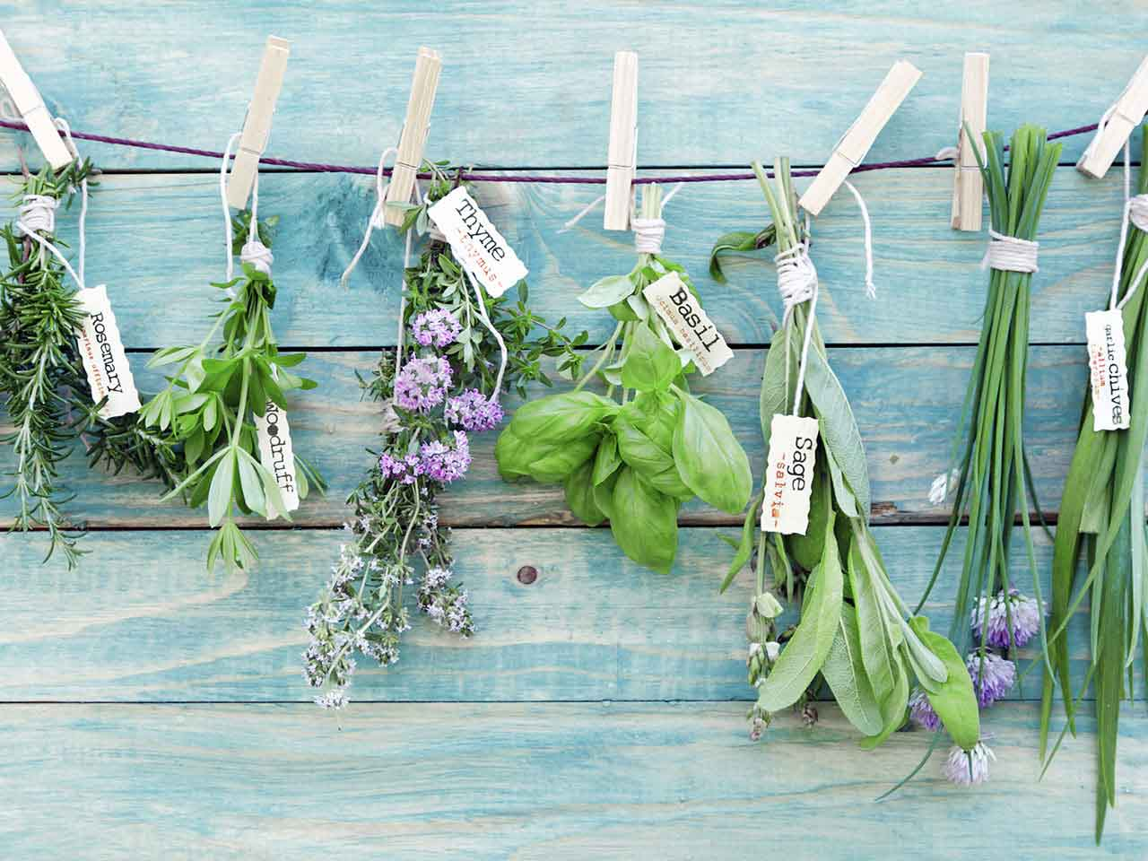 Herbs hanging up against a wooden wall