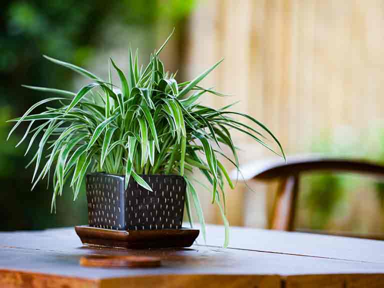 How to improve your home s air quality saga - Plants can improve ambience home ...