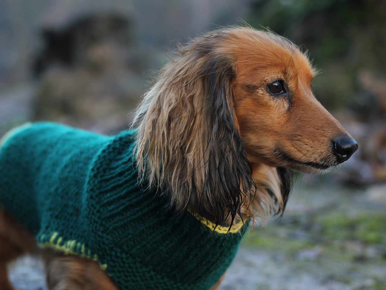 Knitted dog coat modelled by Milo
