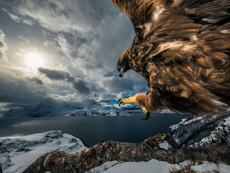 Land of the eagle by Audun Rikardsen, Norway Winner 2019