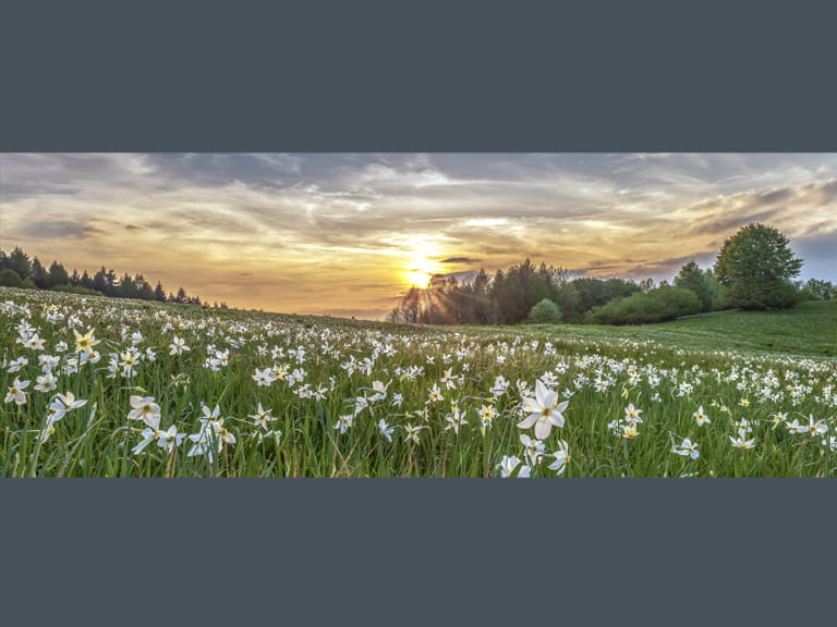 Winner: Wildflower Landscapes category