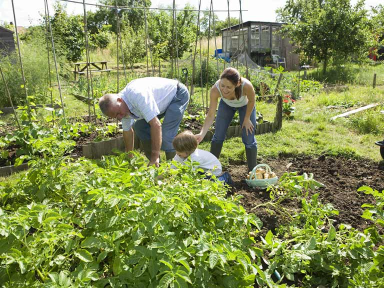 Grandfather and family in allotment plot
