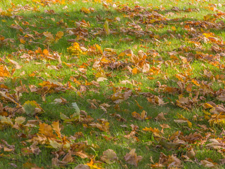 Leaves on lawn