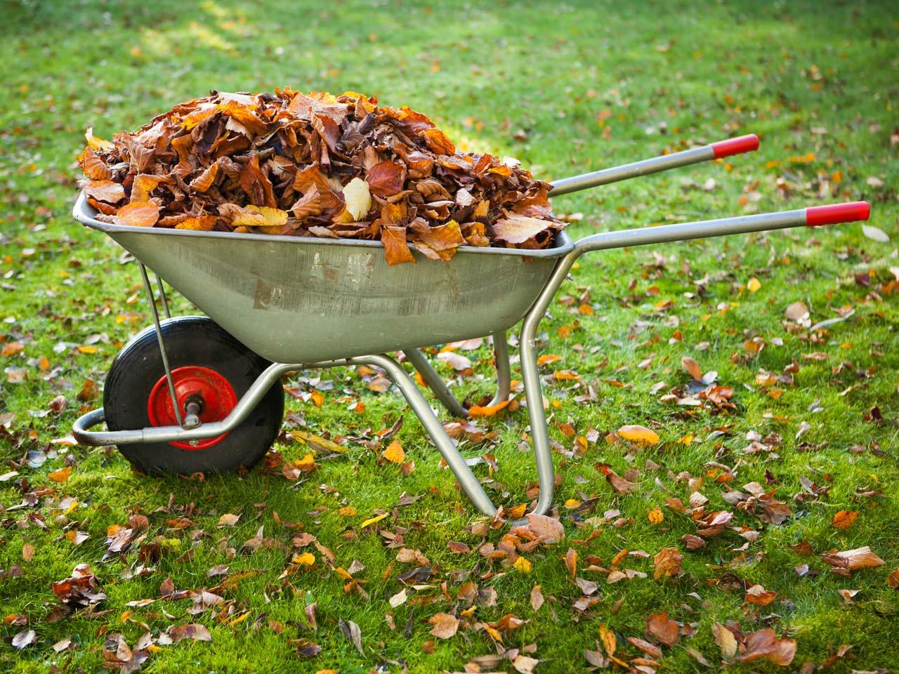 autumn garden jobs to prepare for next year saga