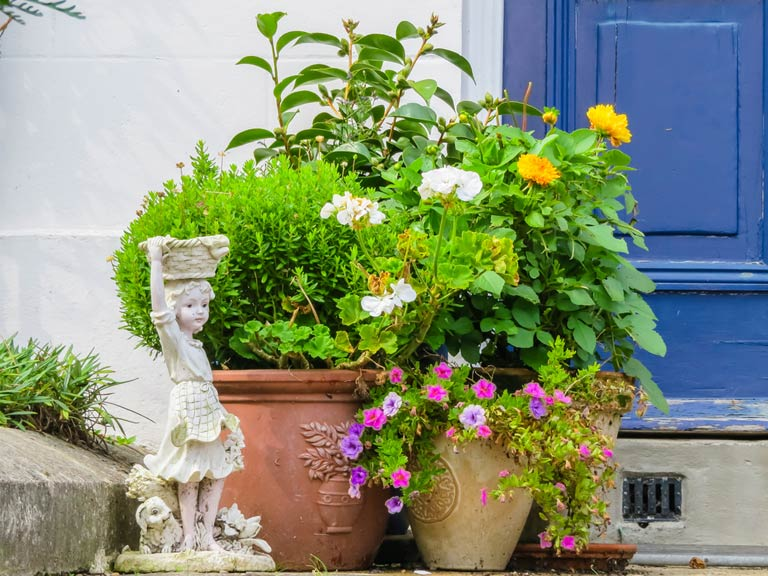growing plants in pots and containers   saga