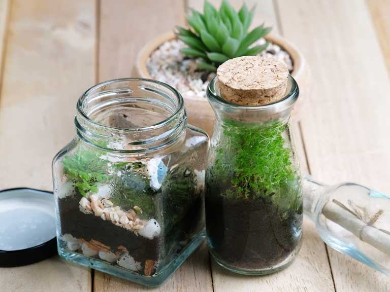 Mini 'jardens' - plants in jars