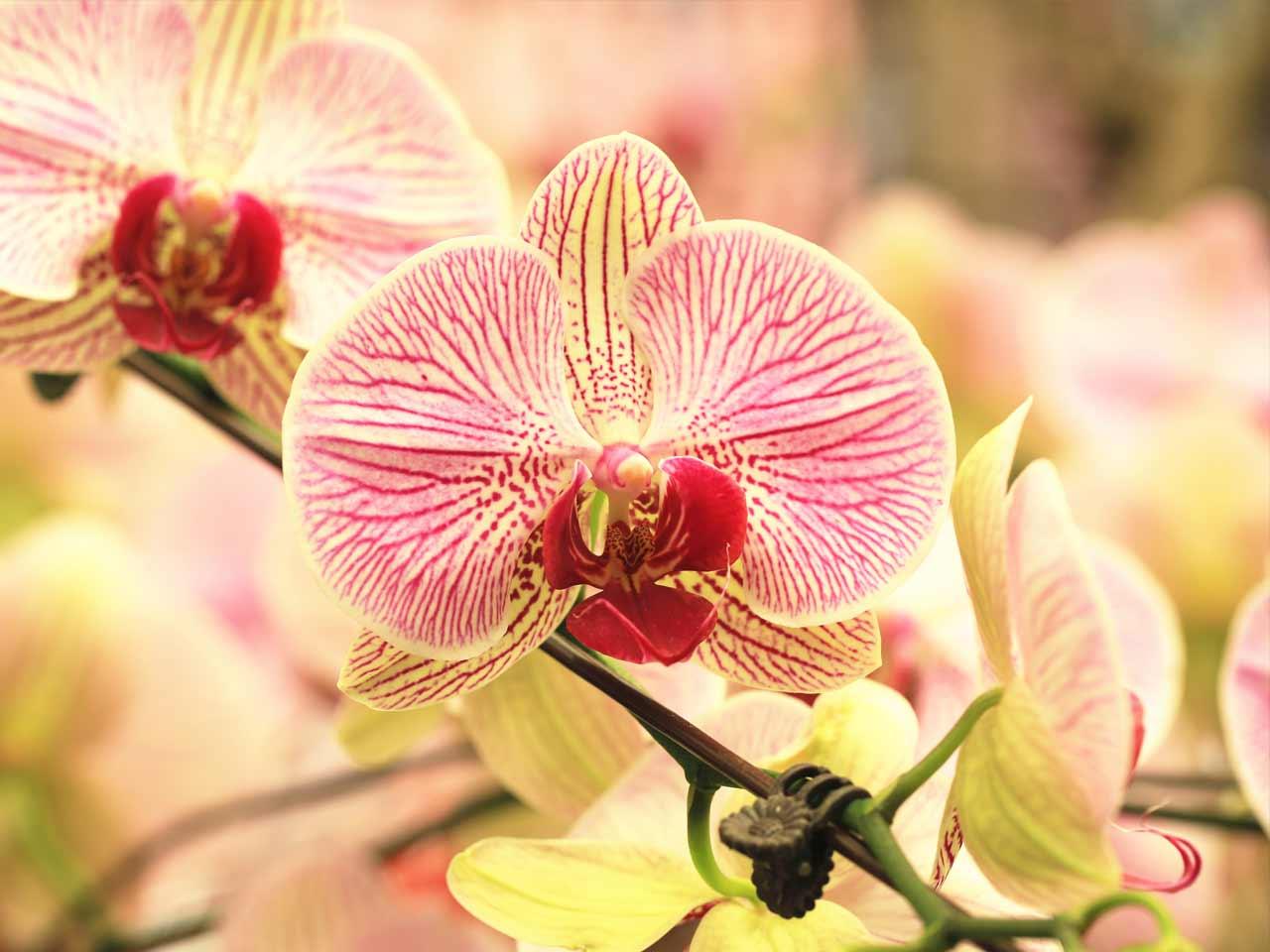 How To Grow Orchids Saga