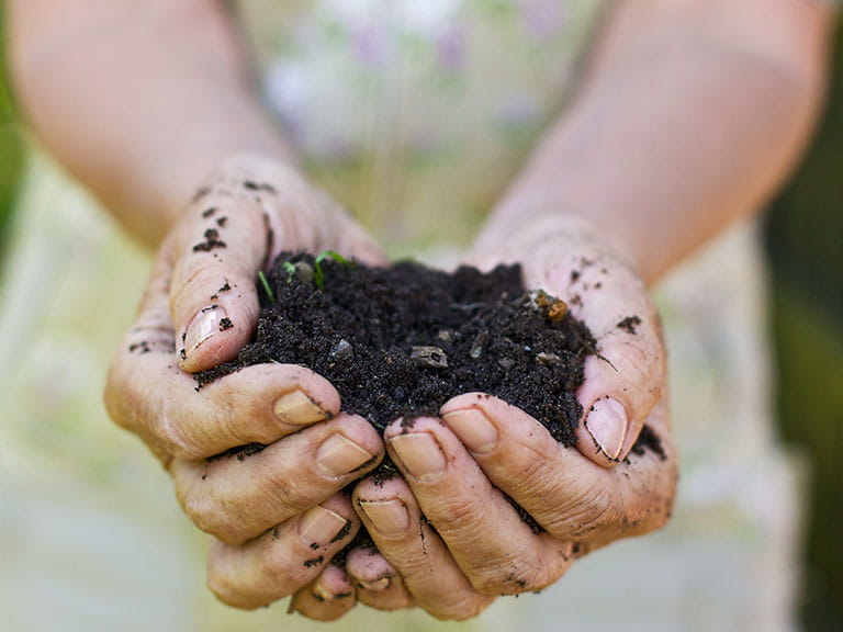 Woman holding peat free compost in her hands