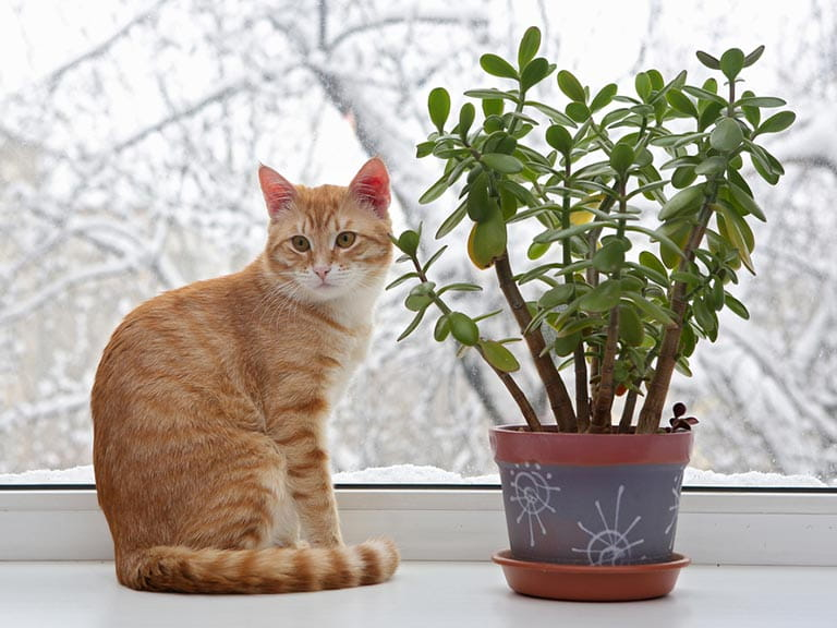 house plant care during winter  saga, Natural flower