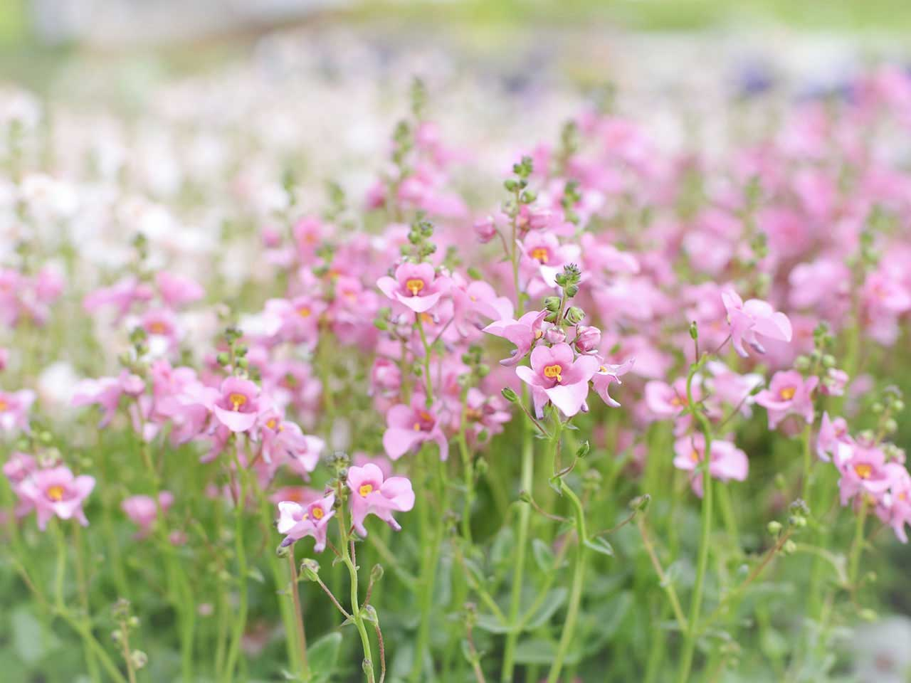 Drought tolerant plants that can be left for the summer saga for Flowering landscape plants