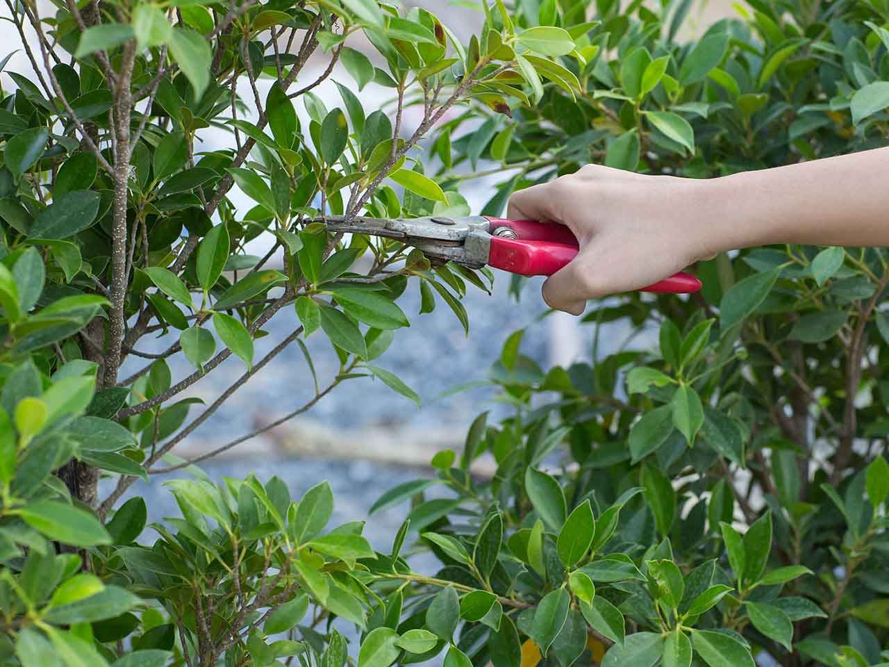Image result for prune plants
