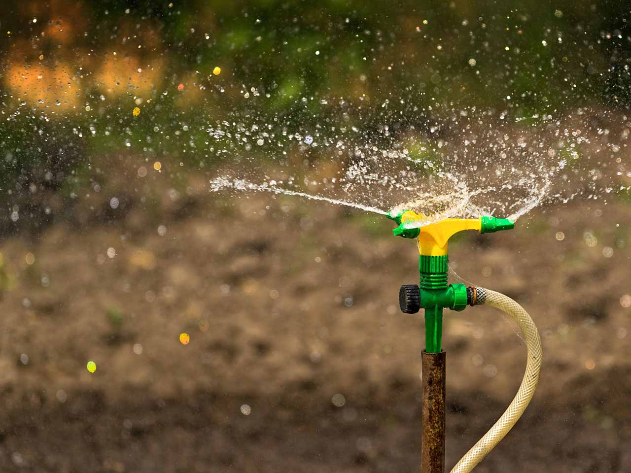 Plant irrigation system sprmnkling water over garden