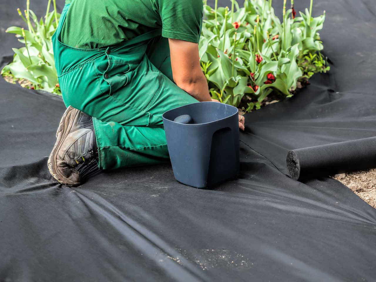 Landscaping Black Plastic Sheeting : Tips for using ground covers weed control saga