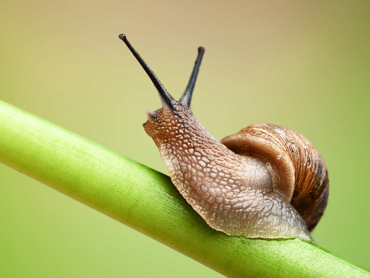 the snail Directed by david soren with ryan reynolds, paul giamatti, maya rudolph, samuel l jackson a freak accident might just help an everyday garden snail achieve his biggest dream: winning the indy 500.