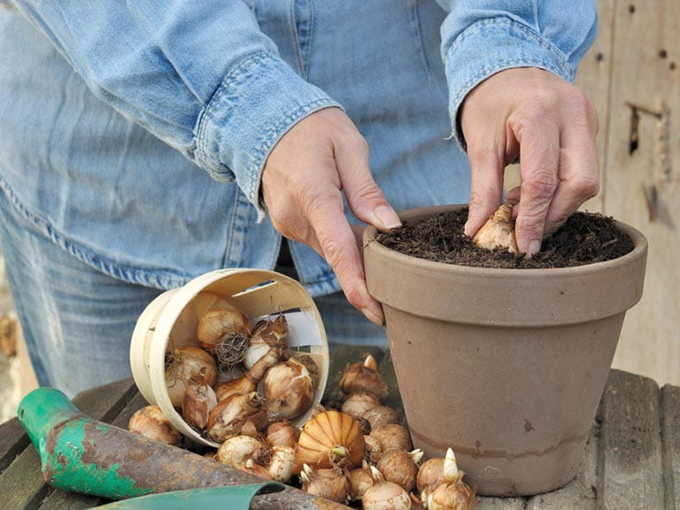 Senior woman planting bulbs into a pot