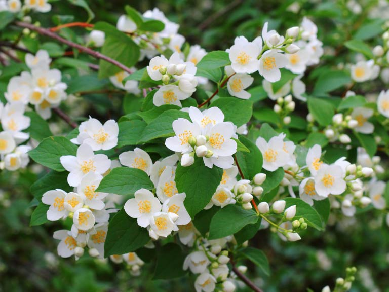 Choosing the best low maintenance shrubs for your garden for Low maintenance year round plants