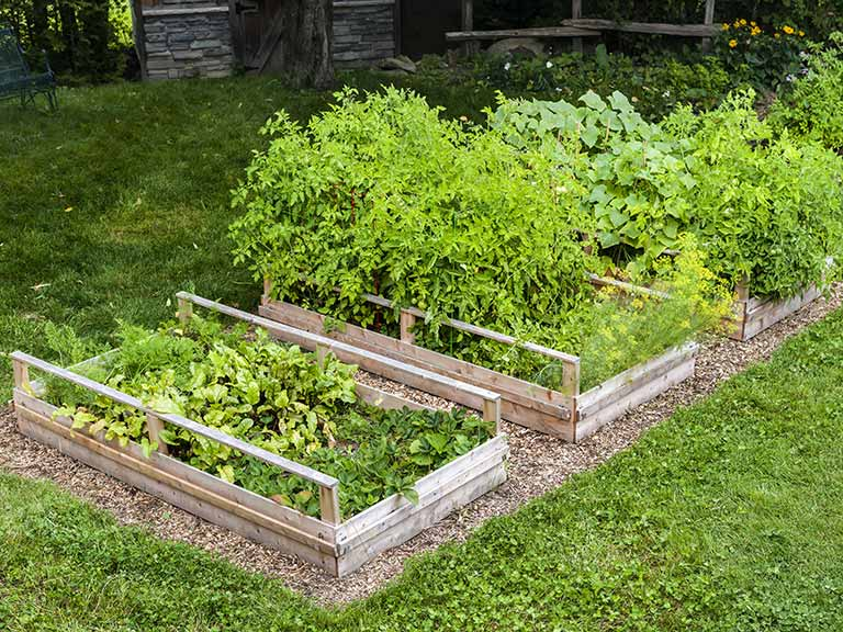 How And Why You Should Make A Raised Garden Bed Saga