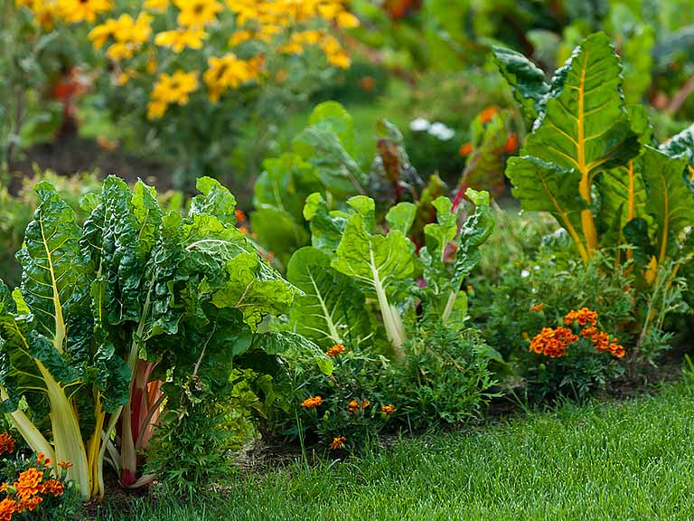 How to grow an edible garden saga for Edle gardinen