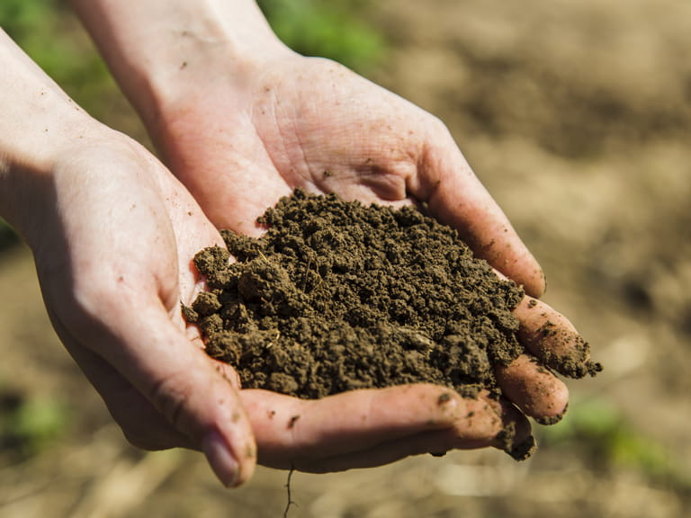 How to test your soil pH level - Saga