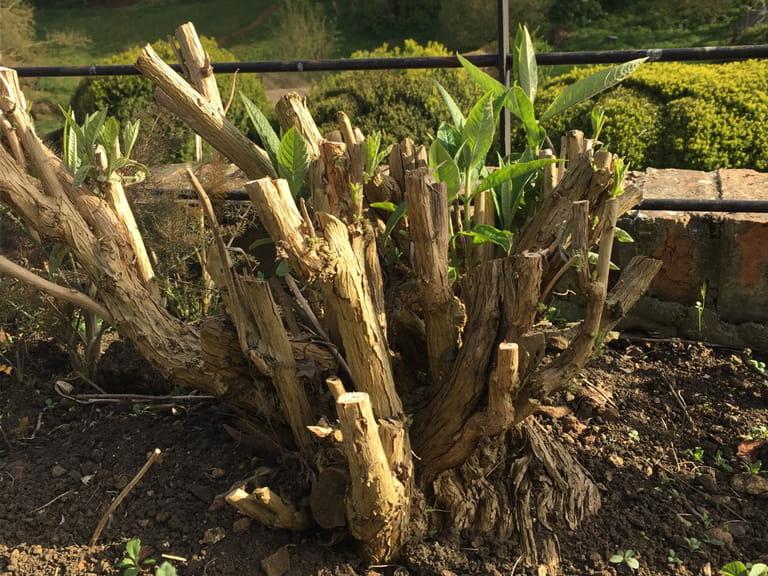 April garden jobs saga for Gardening jobs for april