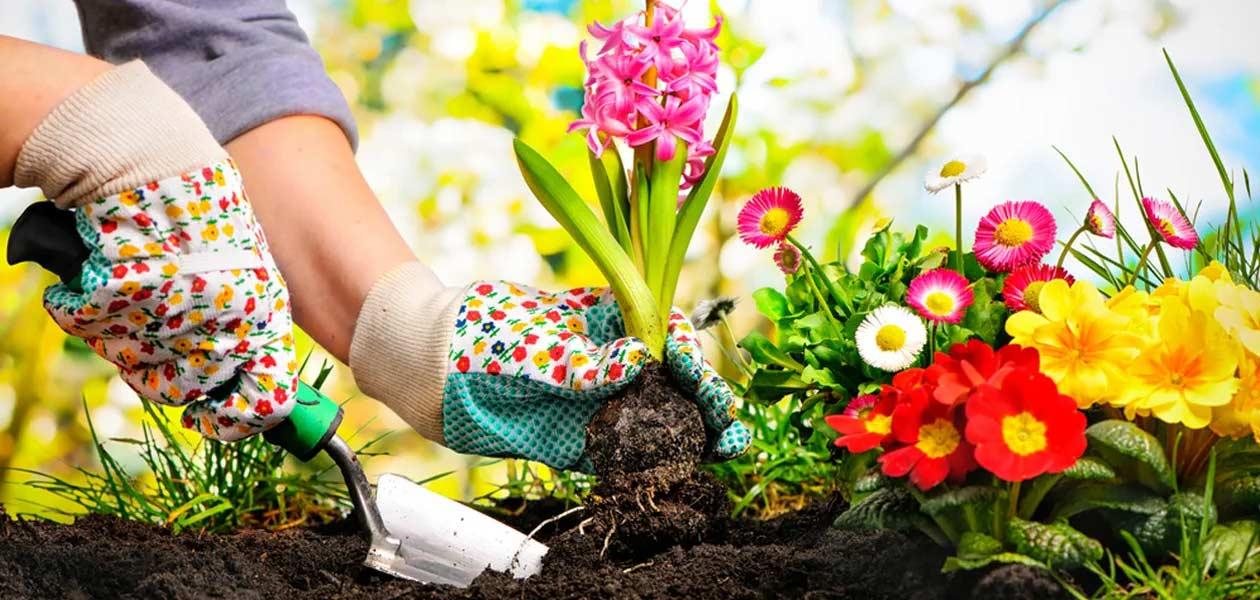 Spring Garden: Flowers & Garden Jobs - Saga