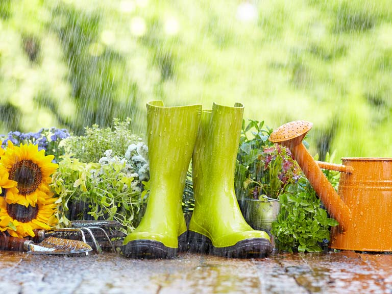 10 ways your garden can help reduce flash flooding Saga