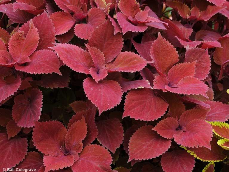 Summer Bedding Plant Ideas Saga