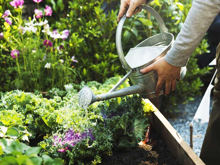 Practical guide to watering the garden saga - Summer time gardening tips ...