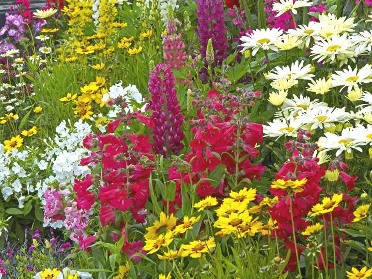 Home and garden saga - Summer time gardening tips ...