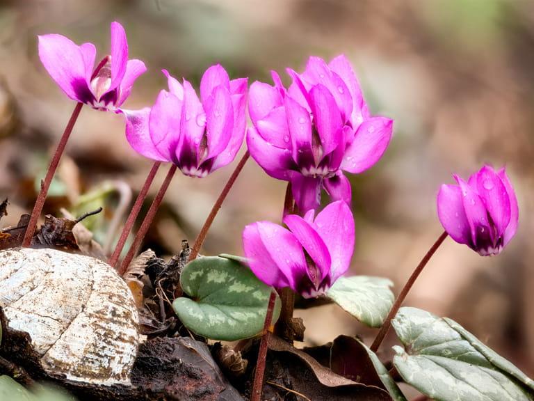Winter Bedding Plant Ideas Saga