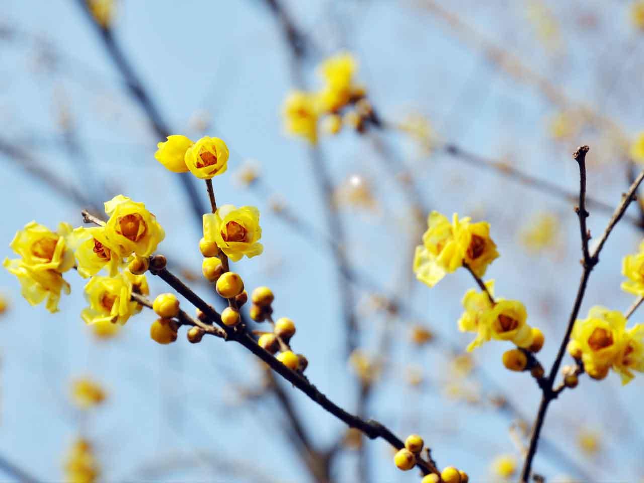 Winter-flowering scented plants - Saga