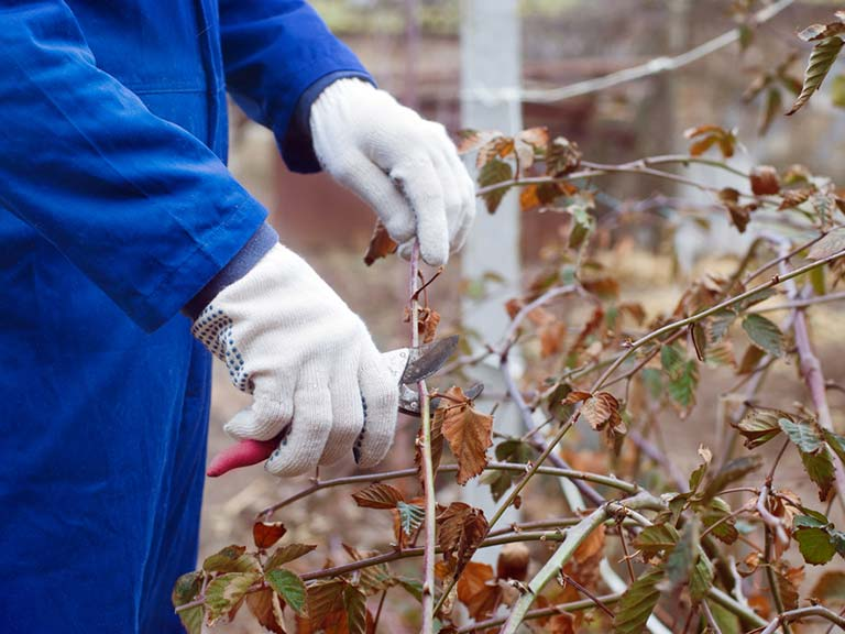 Gardener pruning tree in winter