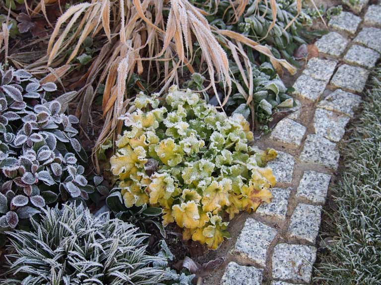 Winter Gardens Can Be Bare And Lifeless Without Some Well Chosen Winter  Foliage