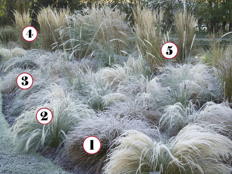 5 grasses for a striking winter border saga for Grasses for garden borders
