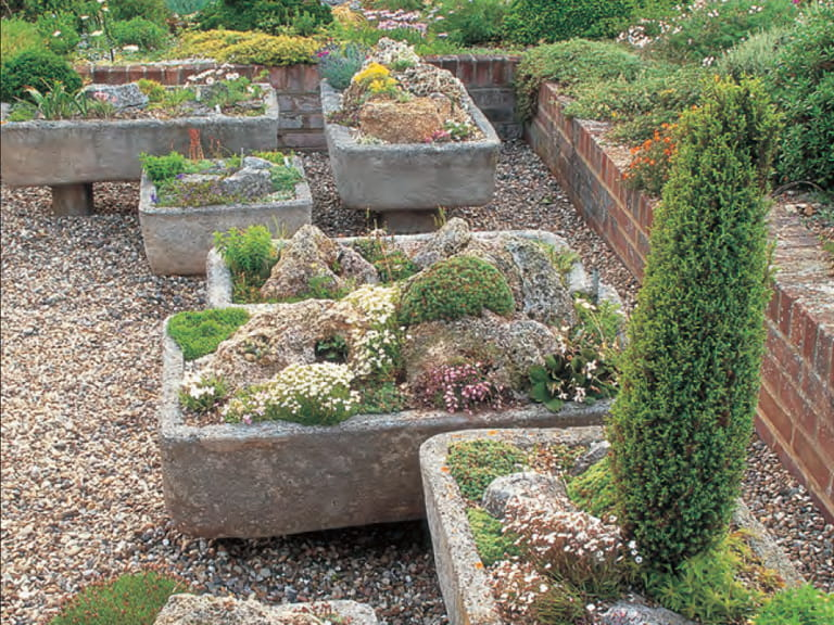 Growing Alpines In Troughs Sinks And Containers Saga