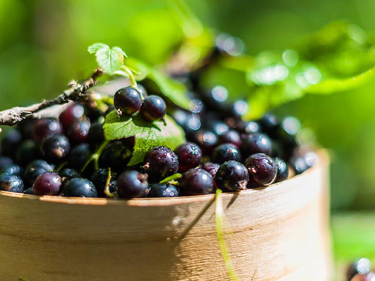 Container of blackcurrants