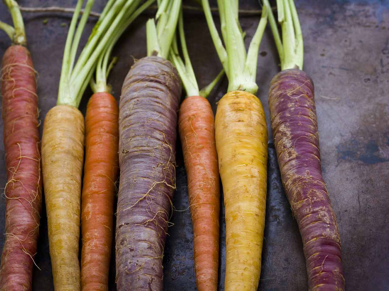 Different varities of carrot